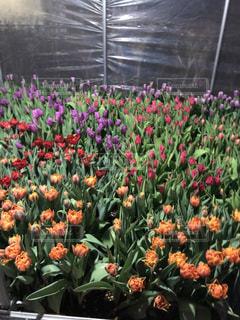 近くの花のアップの写真・画像素材[932926]