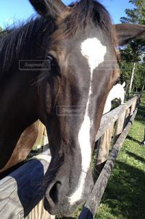 近くに馬のアップの写真・画像素材[935243]