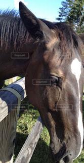 近くに馬のアップの写真・画像素材[935244]