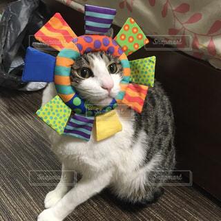 帽子をかぶった猫の写真・画像素材[934646]