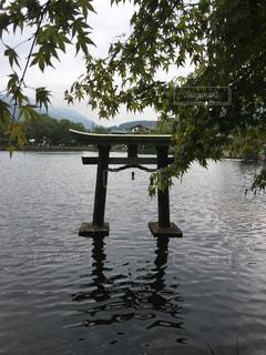 水の体の真ん中の木の写真・画像素材[933168]