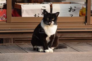 猫の写真・画像素材[256916]
