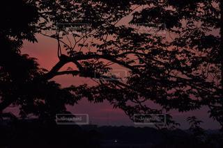 夕日の写真・画像素材[495658]