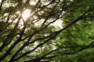 木の写真・画像素材[495660]