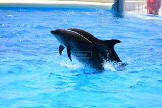 イルカの写真・画像素材[495760]