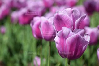 花の写真・画像素材[495764]
