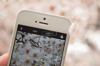 桜 - No.495768