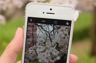 桜の写真・画像素材[495770]
