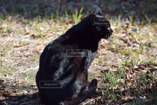 猫の写真・画像素材[495791]