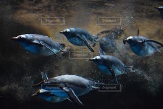 水族館の写真・画像素材[495803]