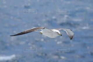 水の体の上を飛んでいる鳥の写真・画像素材[1533251]