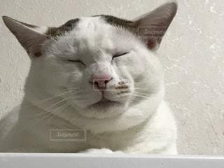 近くに猫のアップの写真・画像素材[1089238]