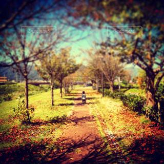 秋の訪れの写真・画像素材[933272]