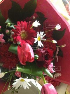 赤い花の写真・画像素材[933286]