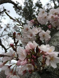 テーブルの上に花瓶の花の花束の写真・画像素材[937246]
