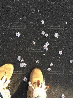 春の写真・画像素材[1096987]