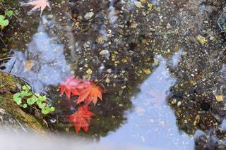 水辺の秋の写真・画像素材[933521]