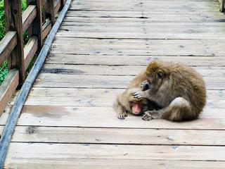 猿の写真・画像素材[1492964]