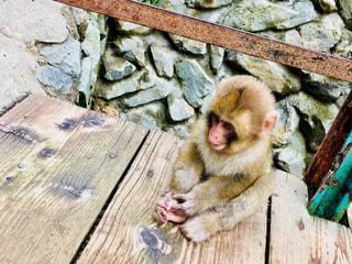 子猿の写真・画像素材[1492966]