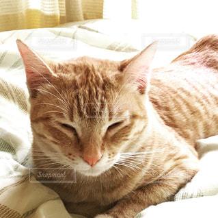 くつろぐ猫の写真・画像素材[934034]