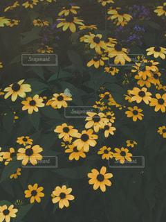 Flowers 1の写真・画像素材[934530]