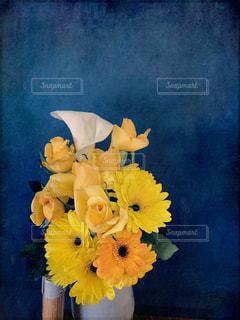黄色いバラの写真・画像素材[1024001]