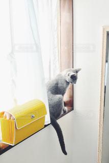 窓際猫の写真・画像素材[1098461]