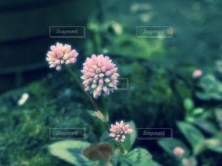 Flowersの写真・画像素材[2704830]