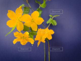 花のクローズアップの写真・画像素材[3074422]