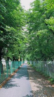 木の側に木がある道の写真・画像素材[3293057]