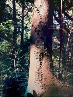 森の中の木の写真・画像素材[3653939]