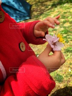 桜とタンポポを持つ小さな女の子の写真・画像素材[934384]