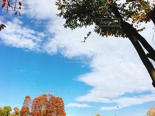 空に舞う枯葉の写真・画像素材[934373]