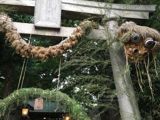 奥澤神社の鳥居の大蛇の写真・画像素材[934600]