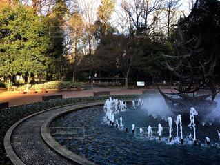 日比谷公園の噴水の写真・画像素材[958481]