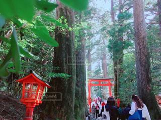 箱根神社の参道の写真・画像素材[1012388]