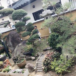 お庭でかくれんぼの写真・画像素材[934693]