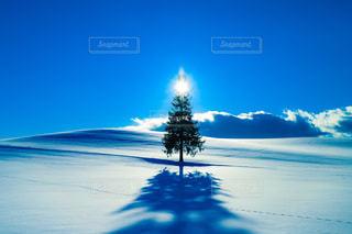 クリスマスツリーの木 - No.958803
