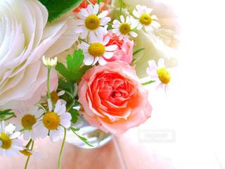 近くの花のアップの写真・画像素材[1008563]