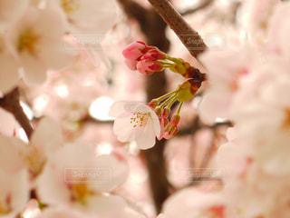 近くの花のアップの写真・画像素材[1114323]