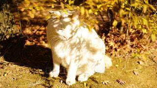 日向ぼっこな猫の写真・画像素材[935213]