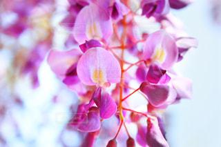 近くの花のアップの写真・画像素材[1179287]