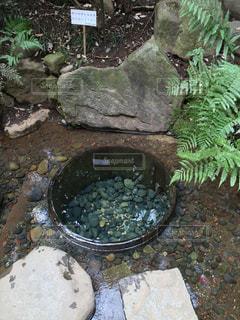 清正の井戸の写真・画像素材[935570]
