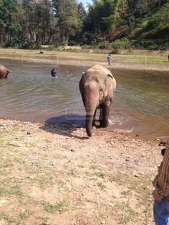 水の体の横に川に沿って歩く象の群れの写真・画像素材[936557]