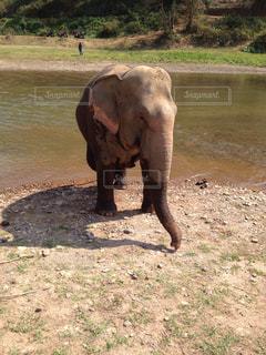 水浴びをする象の写真・画像素材[936559]