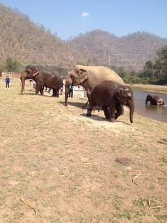 象の群れの写真・画像素材[936562]