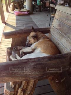 木製のベンチの上に横たわる犬の写真・画像素材[936574]