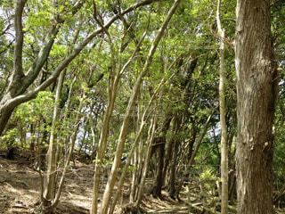 フォレスト内のツリーの写真・画像素材[936402]