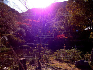 森のビューの写真・画像素材[937445]