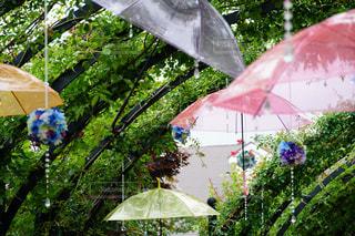 雨の写真・画像素材[2241071]